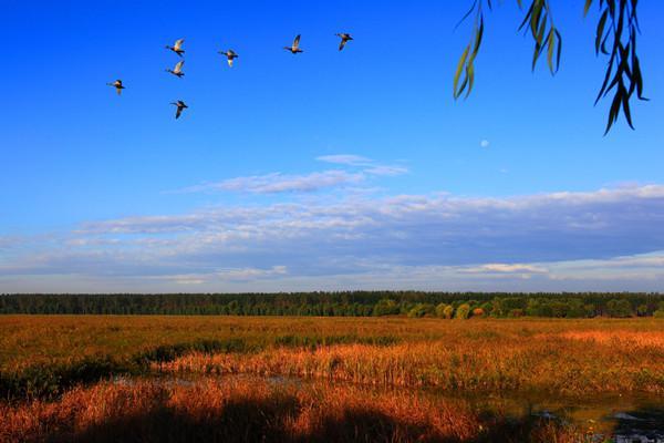 融安大洲岛旅游度假区,融安石门仙湖旅游区(4a)和红茶沟森林公园,了解